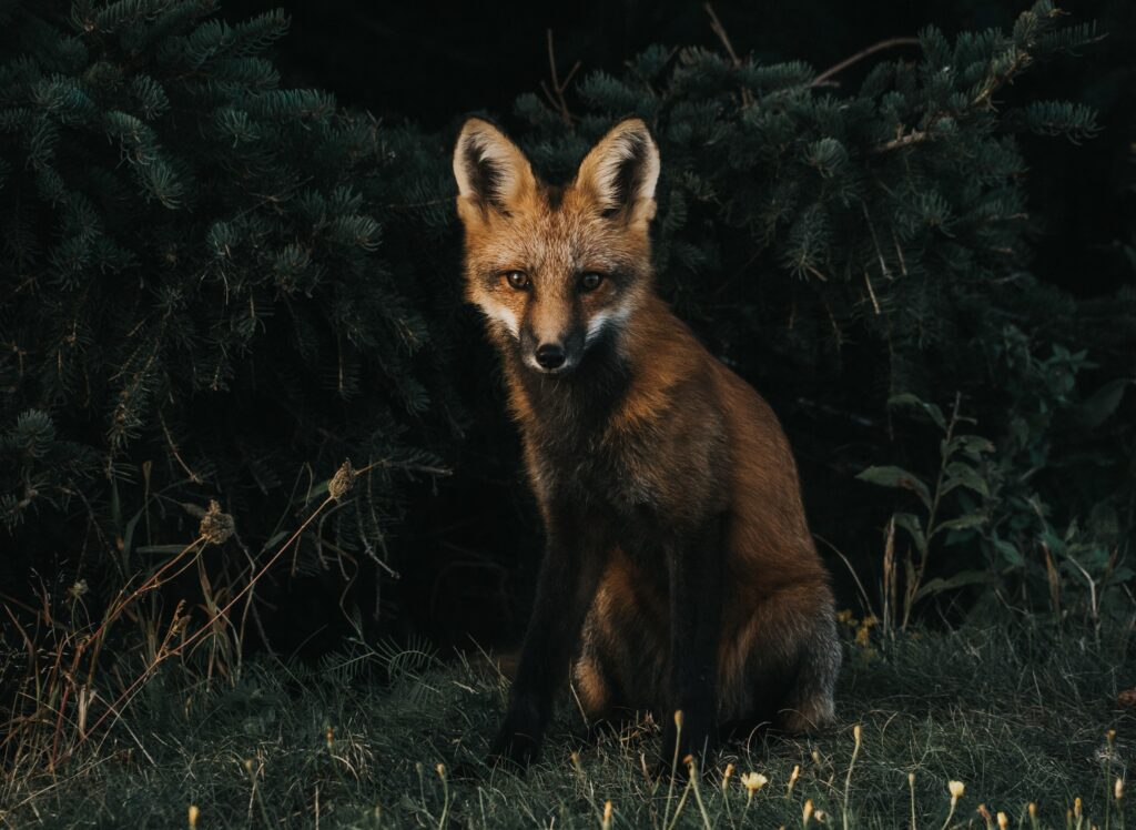 fraud prevention - fox