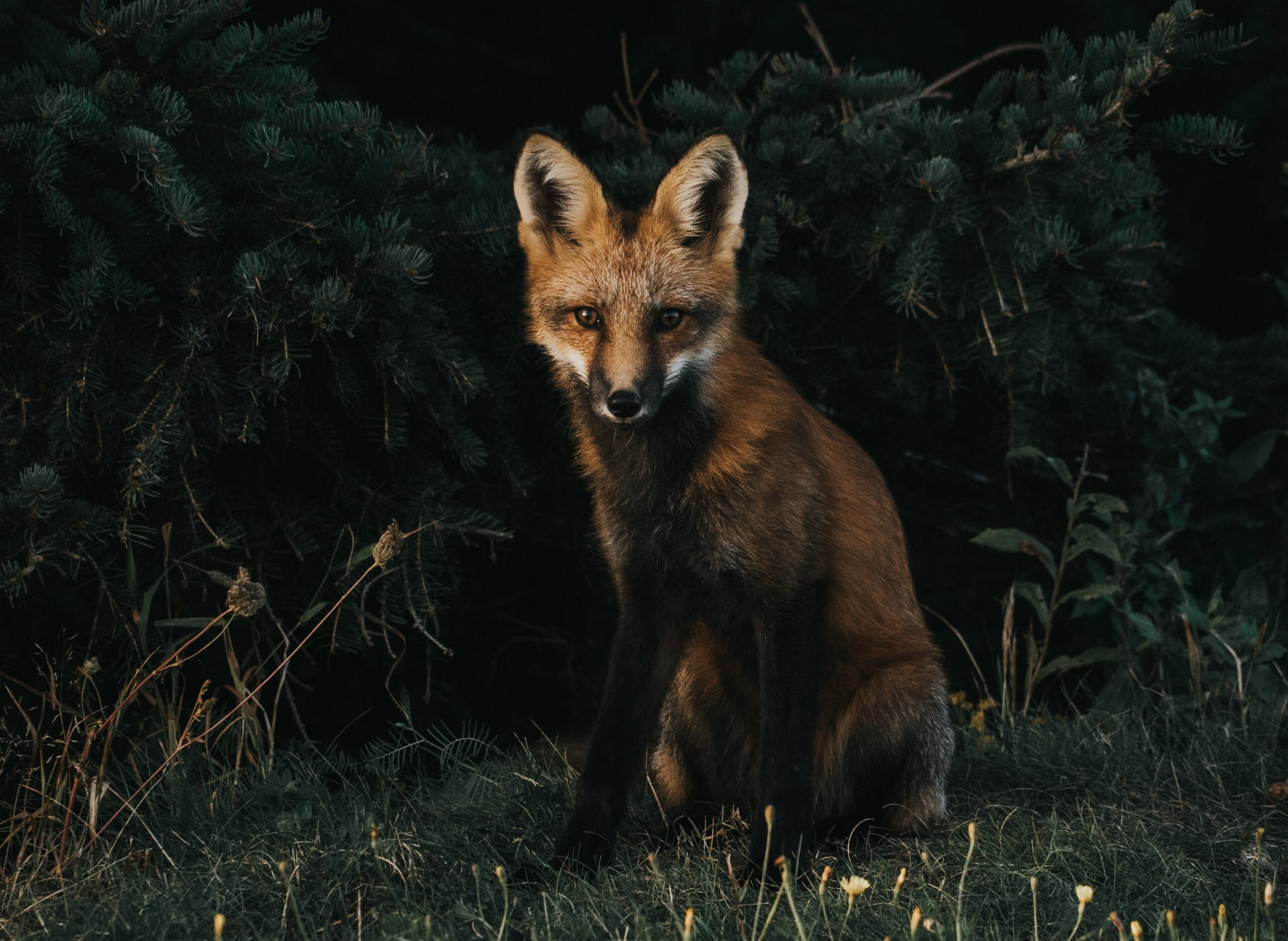 Fraud prevention and sales optimization for the holiday season – A farmer's lesson from a crazy fox (I)