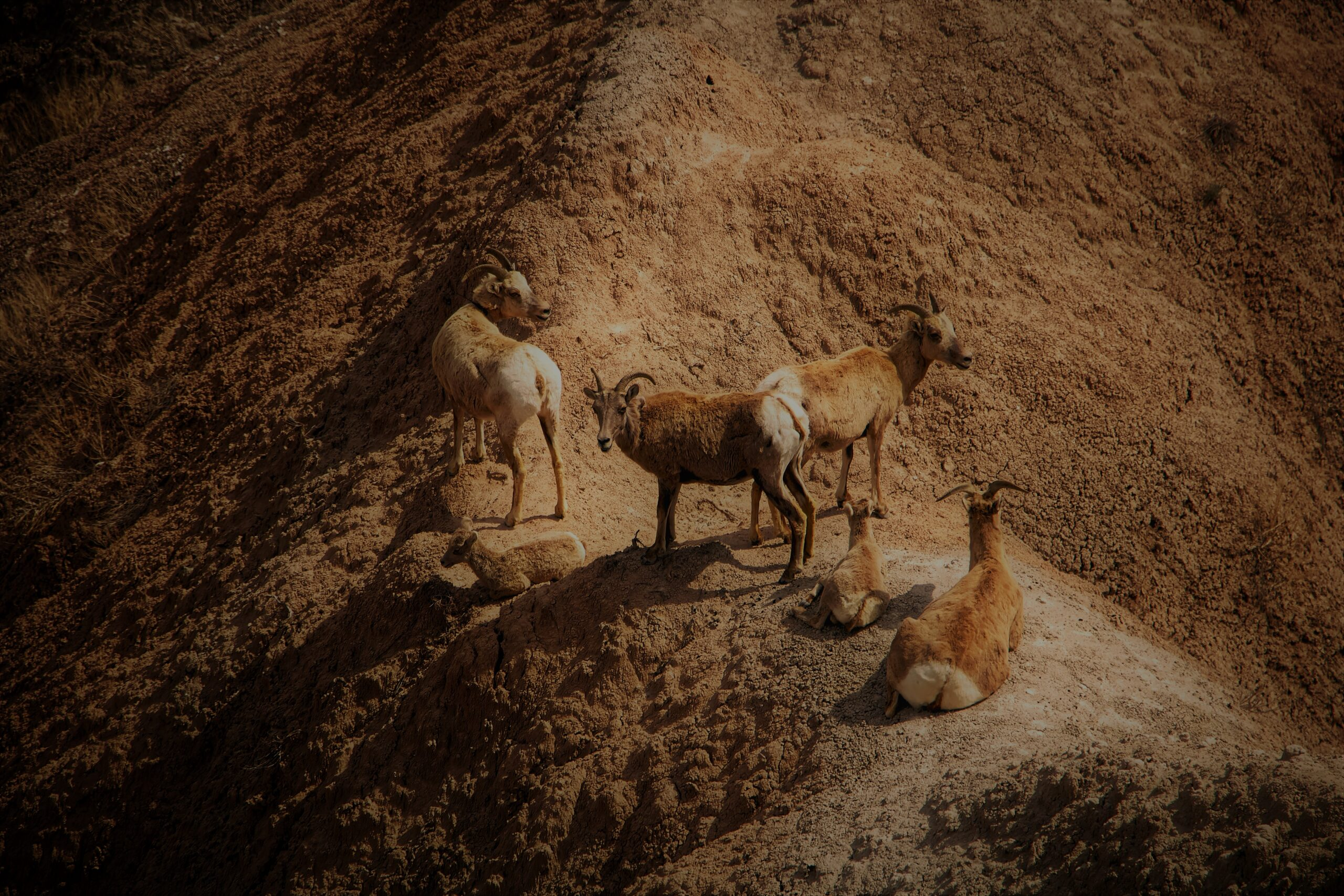 The wisdom of wild goats in sustaining a business network